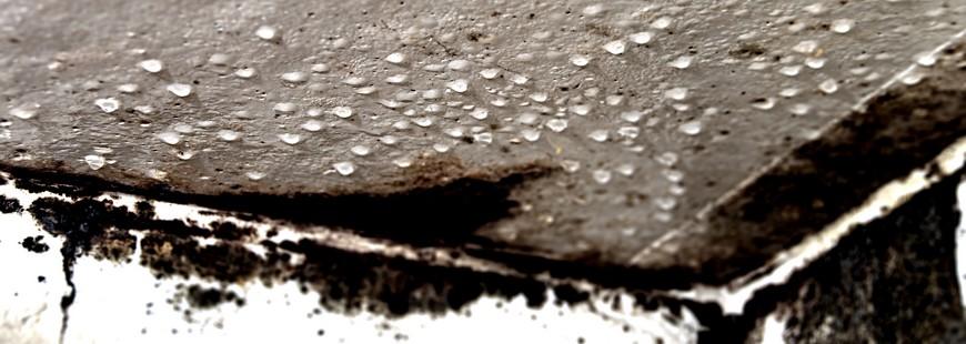 moisissure champignon maison