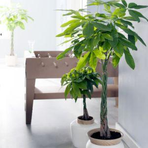 NAHUAA 4 Pi/èces Jasmin Artificiel Plante Artificielles Blanc Fleurs Bouquet Fausses Branches Plantes pour Jardin Fleur D/écor Maison Int/érieur Ext/érieur