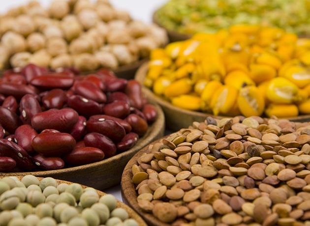 protéines d origine végétale